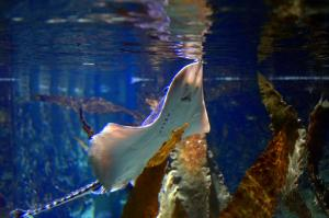 Sea Life Helsinki Tour Packages